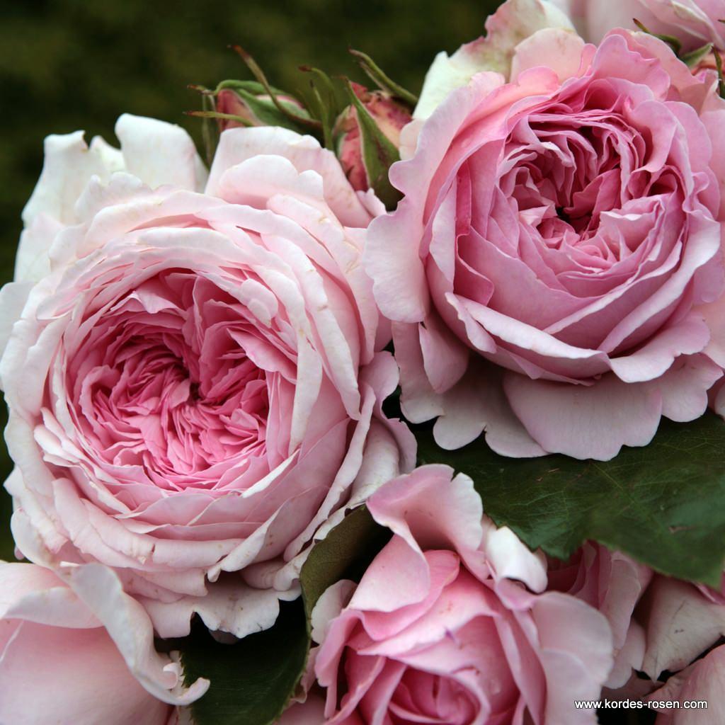 Alexandra-Princesse_de_Luxembourg_25995482b516ab