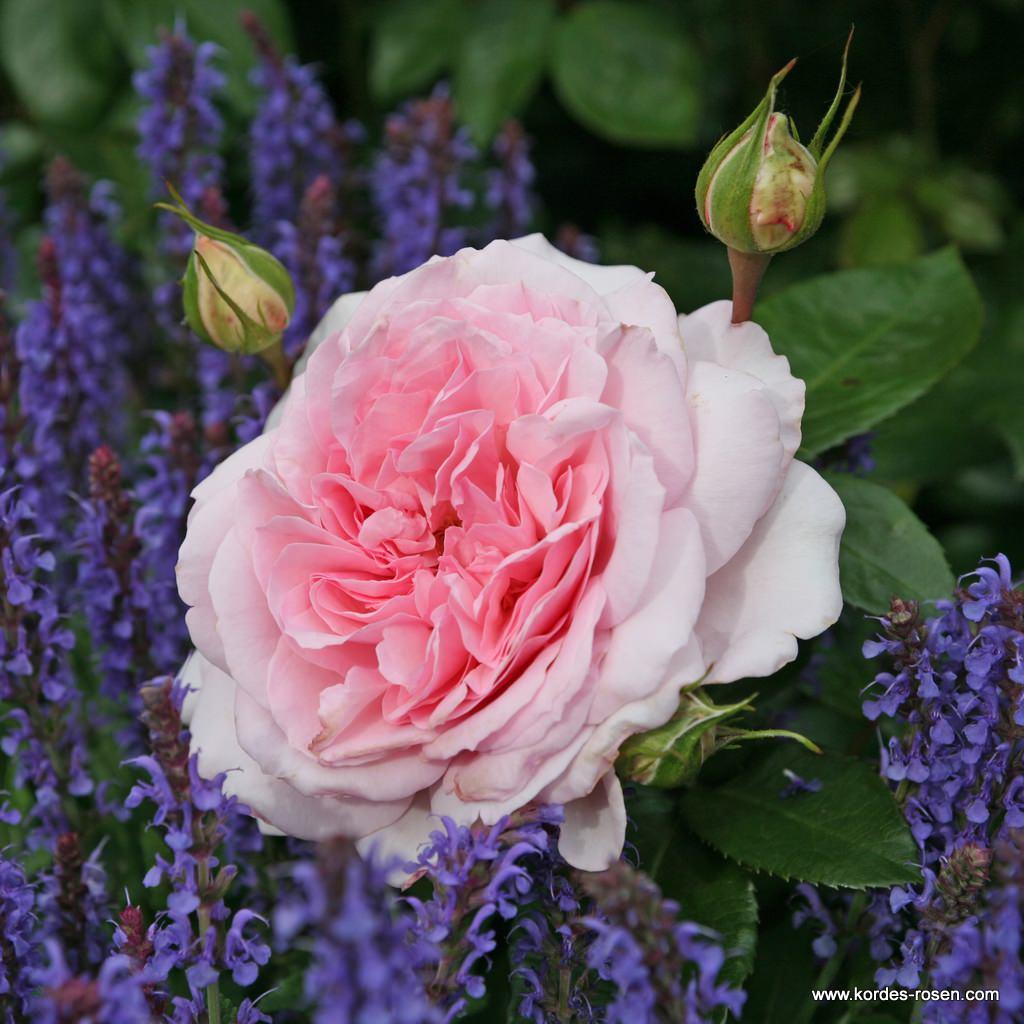 Alexandra-Princesse_de_Luxembourg_15995482abec9e