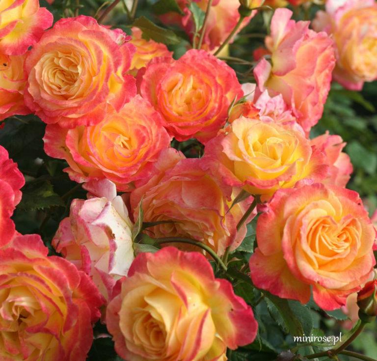Gartenspass_2599547234d78a-768x735