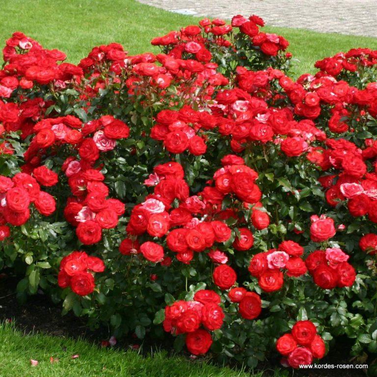 Planten_un_Blomen_3-768x768